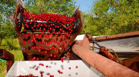 1fruit-crops